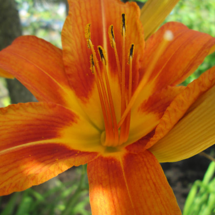 Lily, Canon POWERSHOT A2300