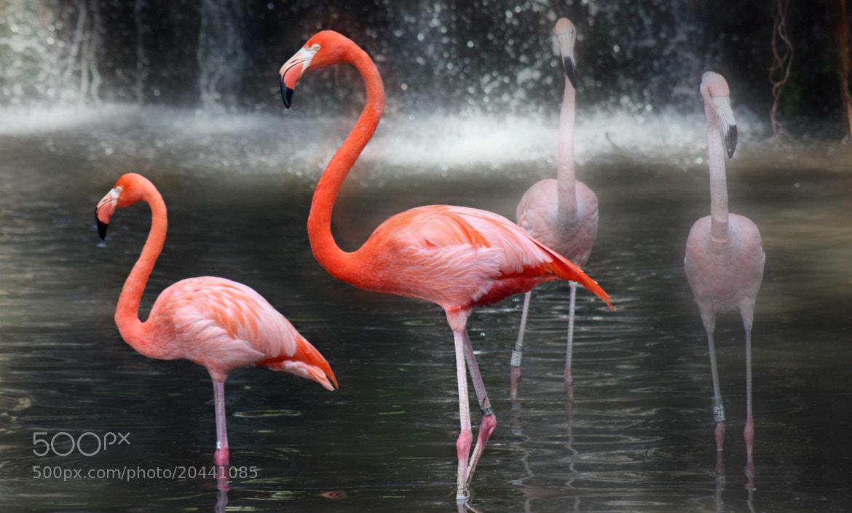 Photograph Synchronicity  by Sivakumar Gopalakrishnan on 500px