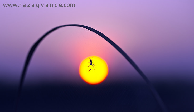 Photograph THE SPIDER by razaq  vance on 500px