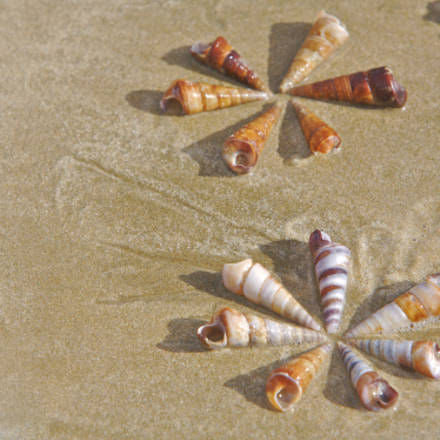 Circles of Shells, Canon EOS 5D, Canon EF 70-200mm f/2.8L IS