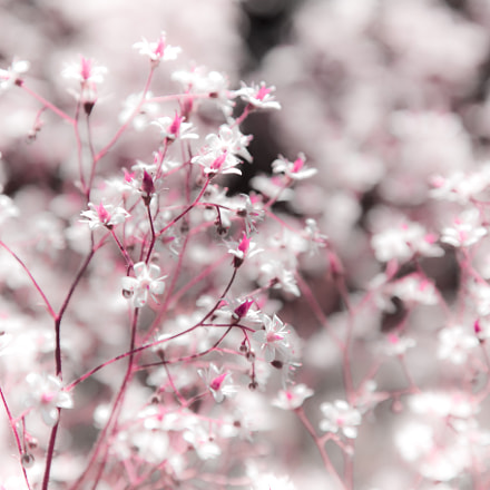 Natural background of flowers., Canon EOS 6D, Canon EF 24-105mm f/4L IS