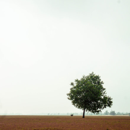 Lonely tree, Sony NEX-C3, E 18-55mm F3.5-5.6 OSS