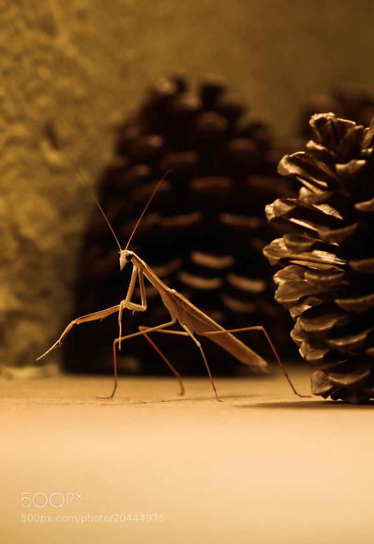 Photograph Praying Mantis by Byron King on 500px