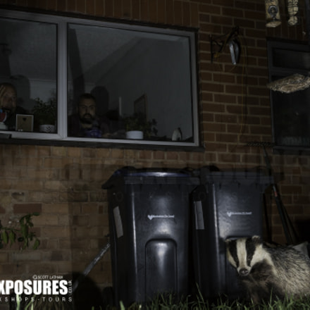 Urban Badger, Canon EOS 7D MARK II, Canon EF 28-80mm f/2.8-4L