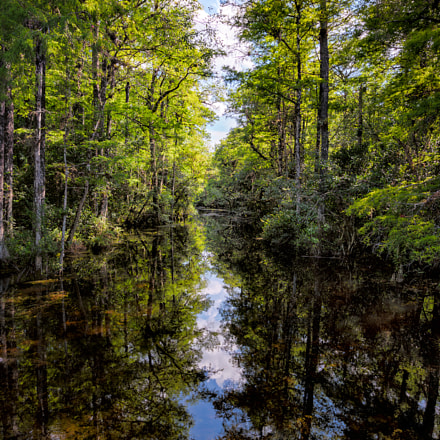 Big Cypress Refelections, Florida, Nikon D600, AF-S Nikkor 16-35mm f/4G ED VR