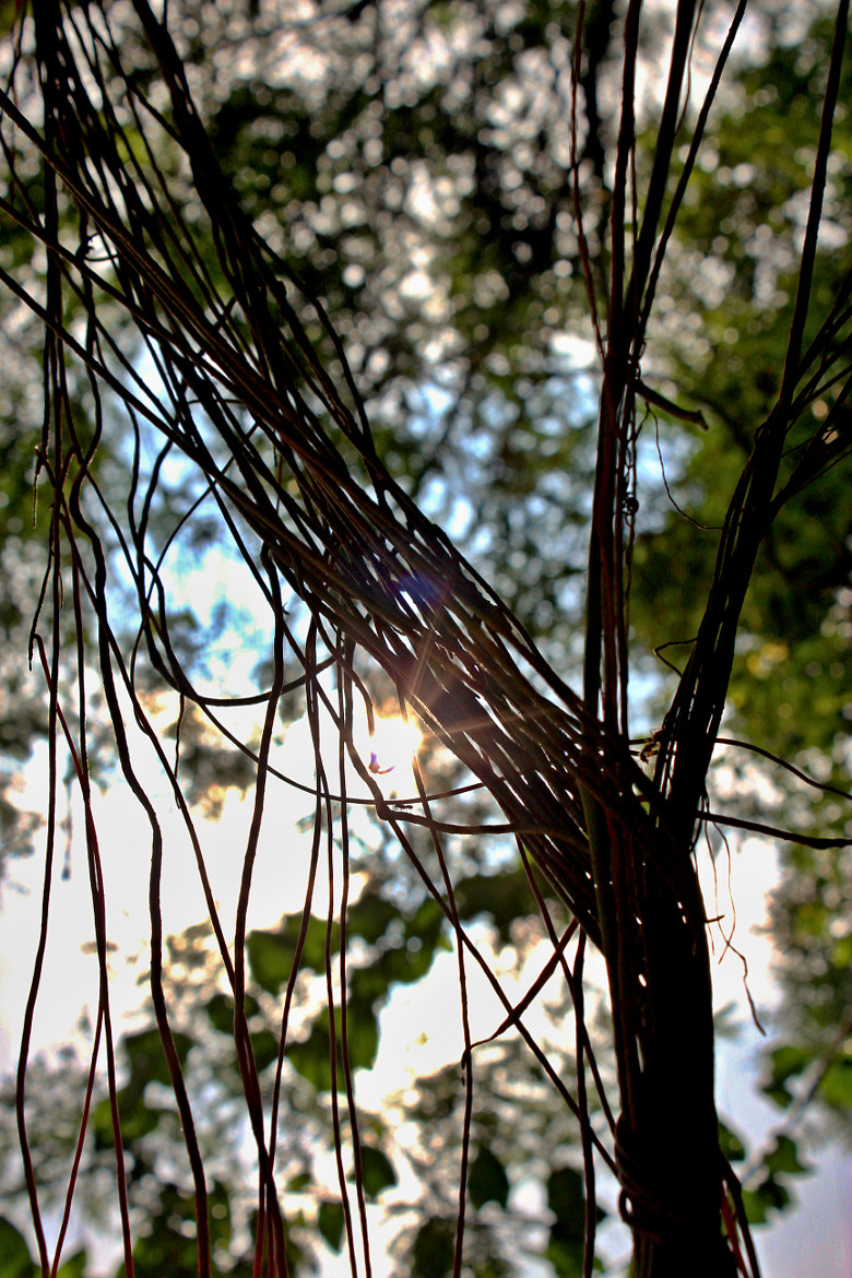 Photograph Entangled by Tutty Souza on 500px