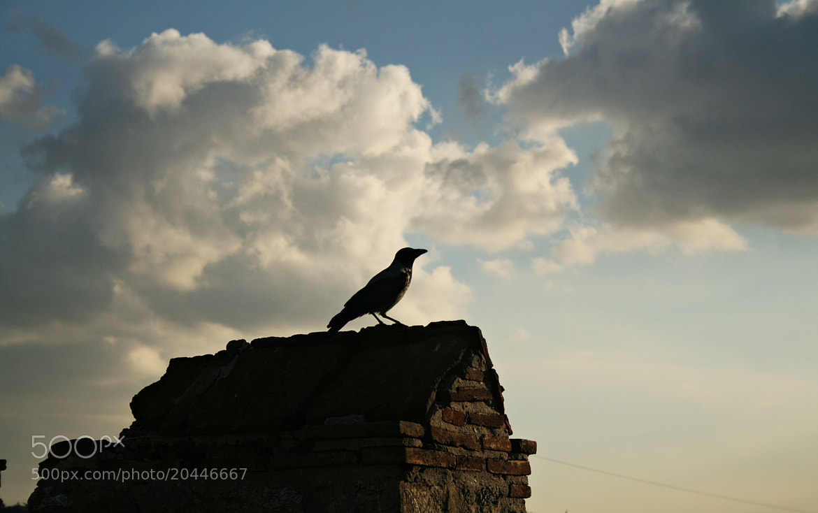 Photograph The Crow by Sibel Sedefoğlu on 500px