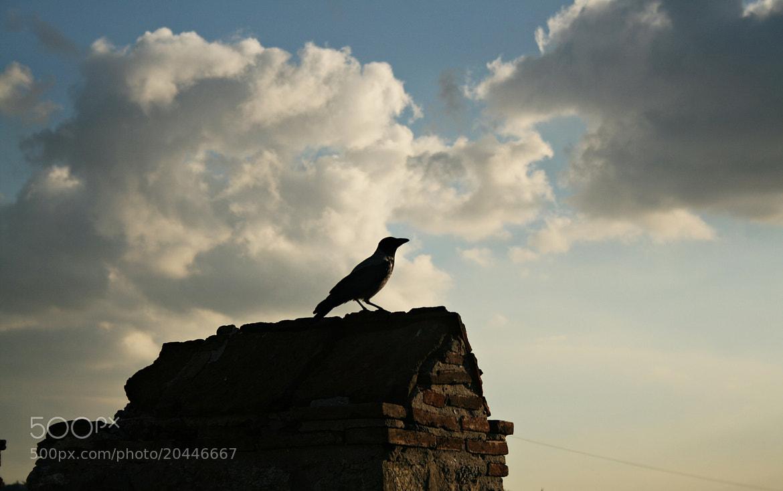 Photograph The Crow by Sibel Sedefoğlu on 500px