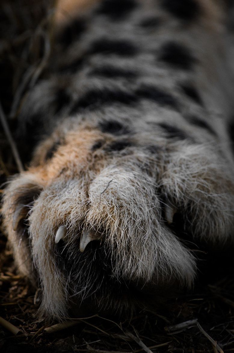 Photograph Cheetah's foot by Byron King on 500px