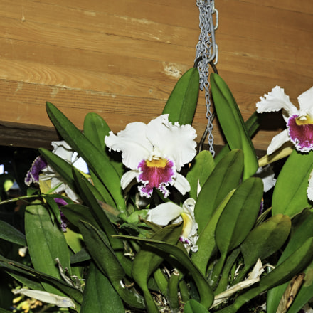 Orchids and Other Flowers, Canon EOS REBEL T4I, Canon EF-S 17-55mm f/2.8 IS USM
