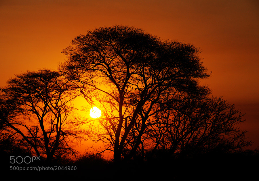 Another beautiful African sunset in Zambia.