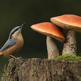 bird and two mushrooms by Vlado Pirša on 500px.com
