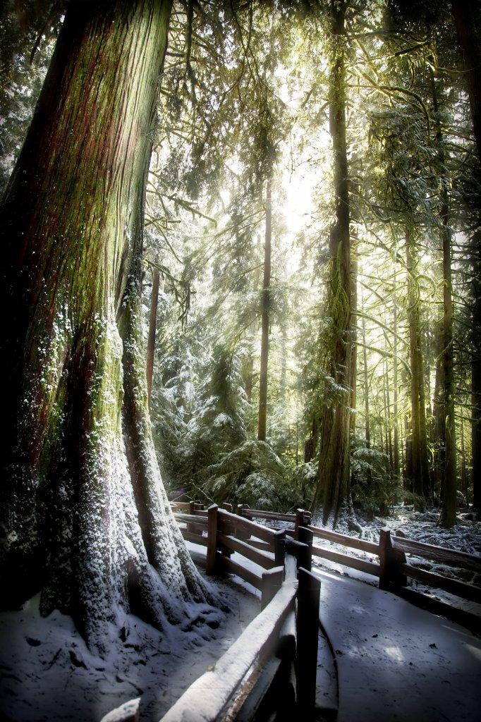 Photograph CATHEDERAL GROVE 2 by Will Datené on 500px