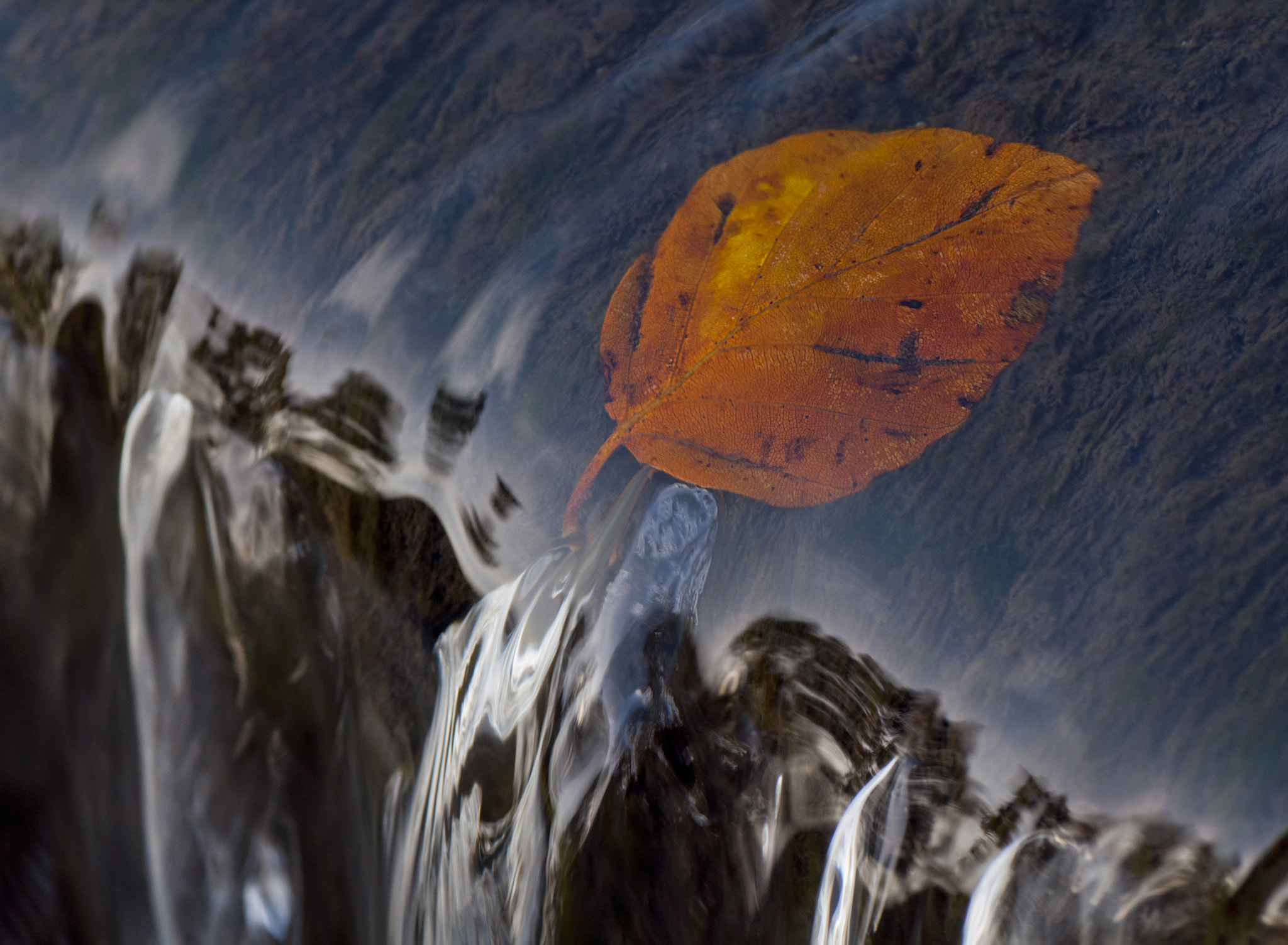 Photograph Caught in the Flow by Alison Roberts on 500px