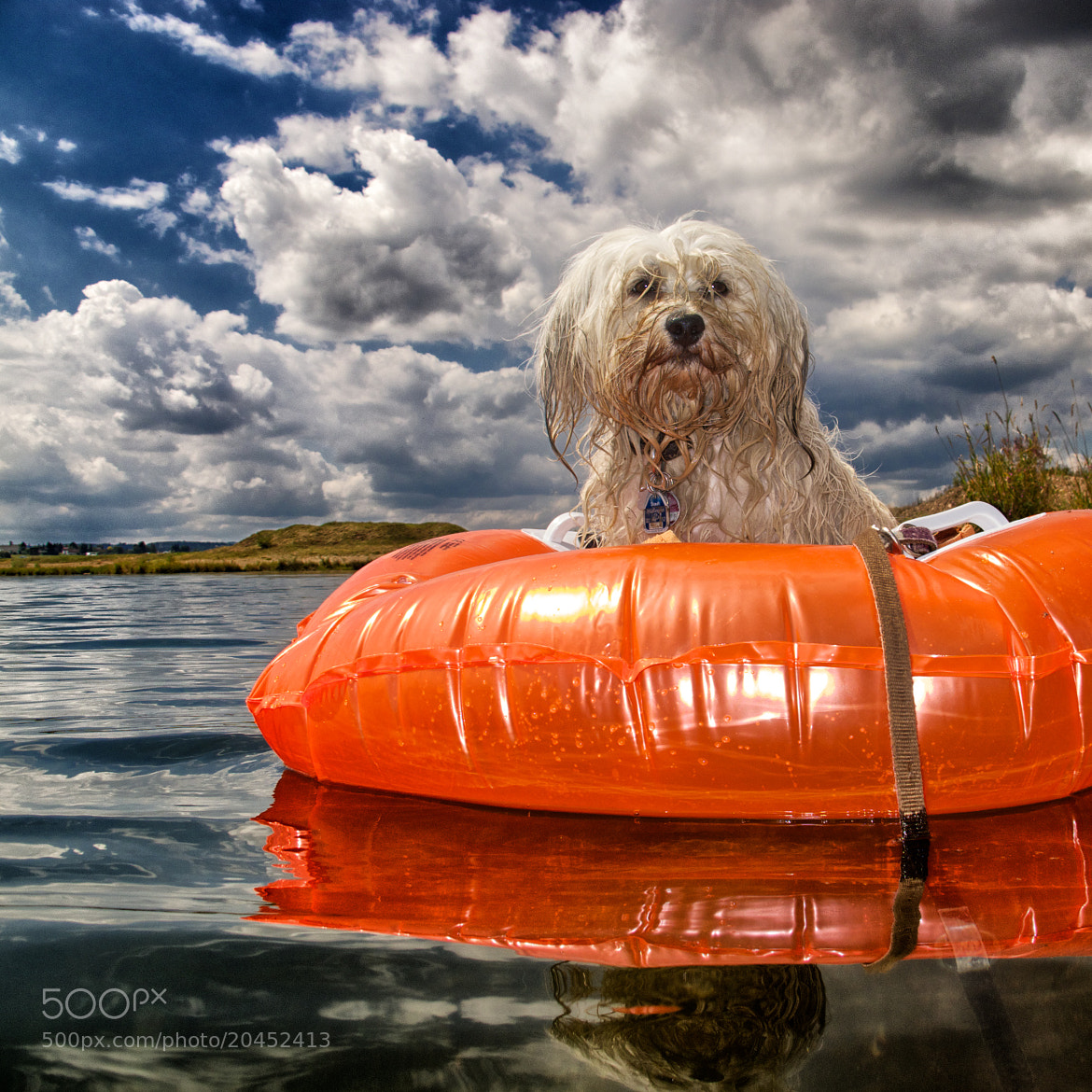 Photograph Hundeboot by Ralf Bitzer on 500px