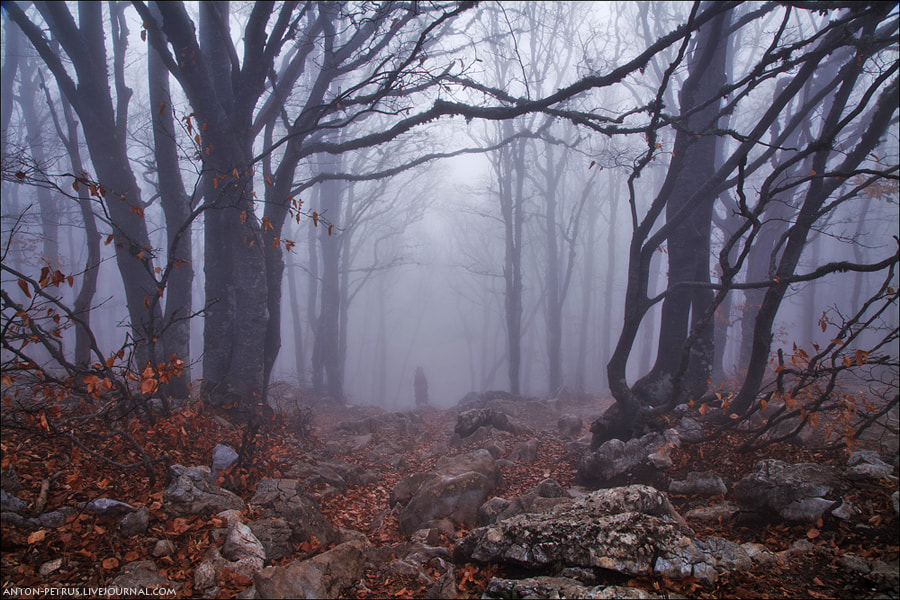Photograph Forest ghost by Anton Petrus on 500px
