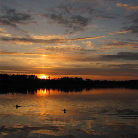 Loons at sunrise, Canon POWERSHOT SX120 IS