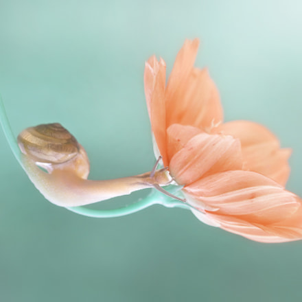 Snail and flower, Canon EOS 1100D