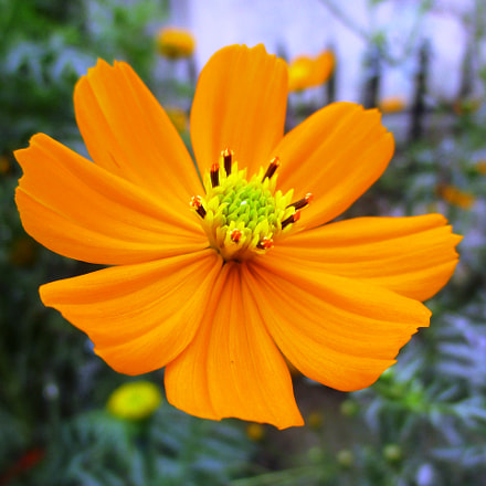 ID: Cosmic Orange Flower, Canon IXUS 160