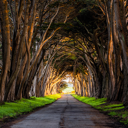 Cypress Tunnel, Nikon D810, PC Micro-Nikkor 85mm f/2.8D
