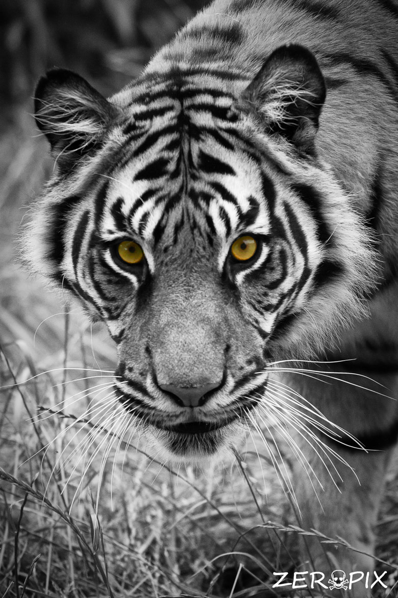 Photograph Eye's Front by ZeroPix Photography on 500px