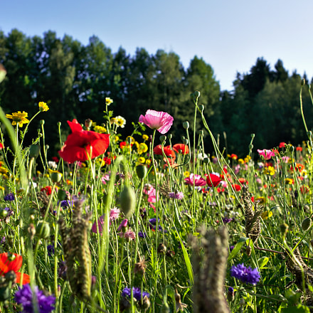 field of flowers, Nikon D700, AF Nikkor 35mm f/2D