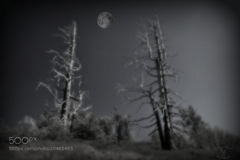 "Photograph "" Night on Wizard Mountain "" by Barry von Bernhard on 500px"