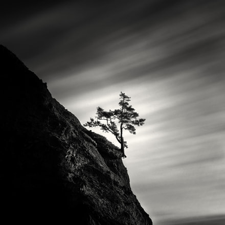 Lone Tree on Hillside, Sony SLT-A99V, Tamron SP 24-70mm F2.8 Di USD