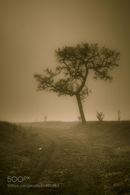 Photograph ... by Matheus Dalmazzo on 500px