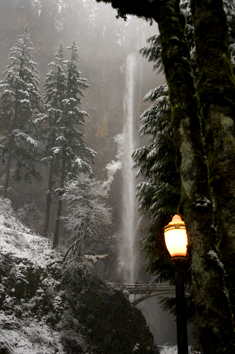 Photograph Narnia by Renae Smith on 500px