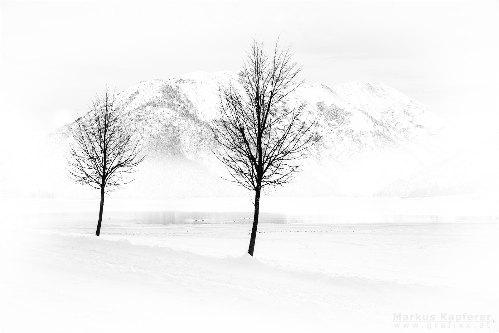 Photograph Trees by Markus Kapferer on 500px