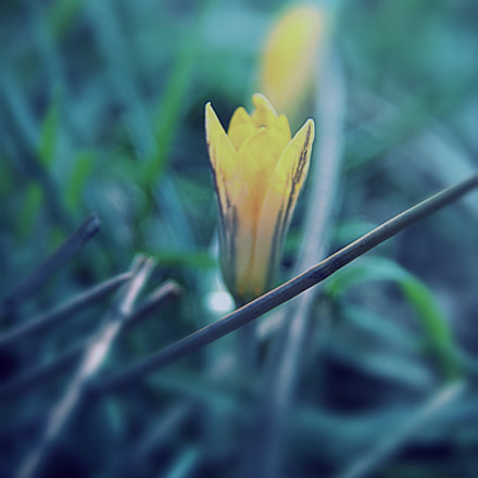 Spring emotions, Canon EOS 600D, Sigma 17-70mm f/2.8-4.5 DC Macro