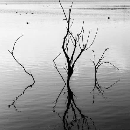 shadows in the lake, Canon EOS 1200D, Canon EF-S 55-250mm f/4-5.6 IS STM
