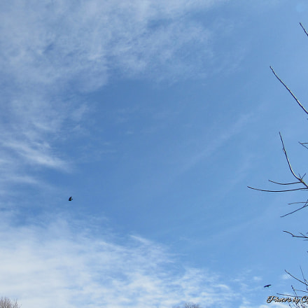 Birds that Fly Together, Canon POWERSHOT SX530 HS