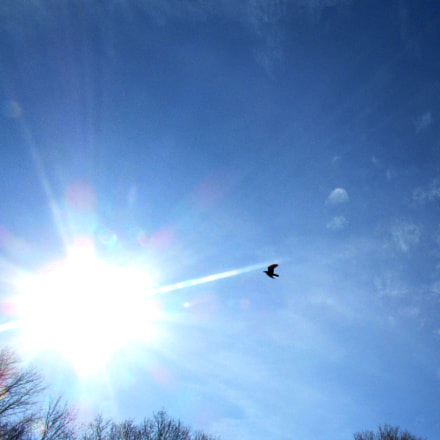 Flying into the Sun, Canon POWERSHOT SX530 HS