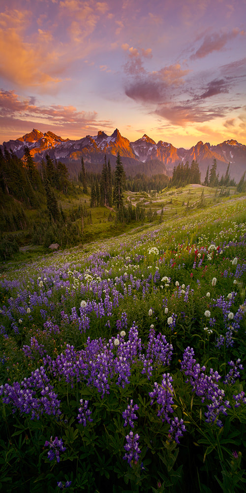 Photograph Summer Nights by Lijah Hanley on 500px