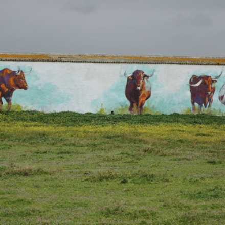 painted bulls charging, Nikon COOLPIX P340