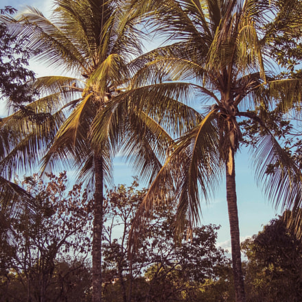 Coconut trees, Panasonic DMC-LZ30