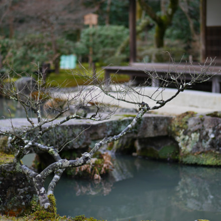 Japanese old garden in, Panasonic DMC-GM1S, Lumix G 42.5mm F1.7 Asph. Power OIS