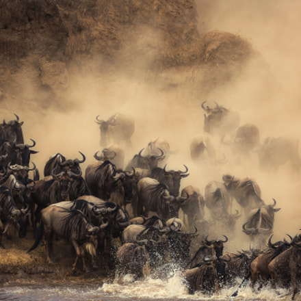 The crossing, Canon EOS 5D MARK III, Canon EF 500mm f/4L IS II USM