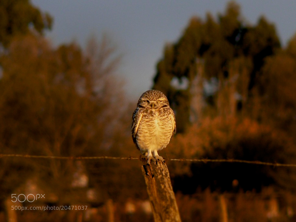 Photograph Gowl Eyes by Jose  Ferreyra on 500px