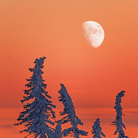 Sunset colours in Tundra, RICOH PENTAX K-1, Sigma 150-500mm F5-6.3 APO DG OS HSM