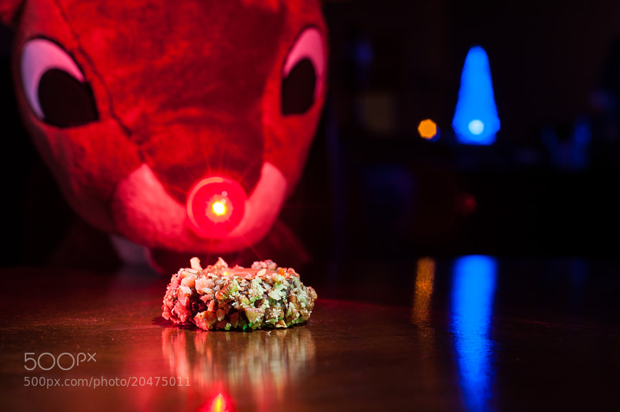 Rudolph's Turtle Cookie by Jay Scott (jayscottphotography)) on 500px.com