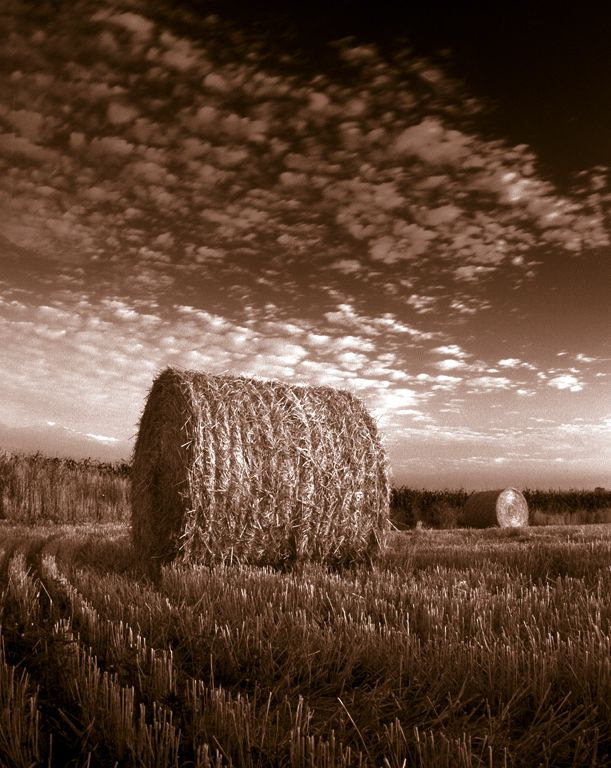 Photograph Summer's Harvest by Norm Riekenbrauck on 500px