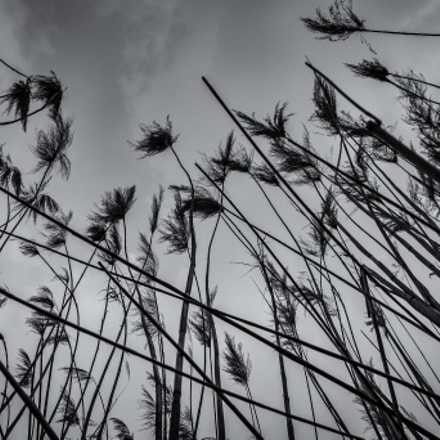 reeds, Canon EOS 6D, Tamron SP 35mm f/1.8 Di VC USD