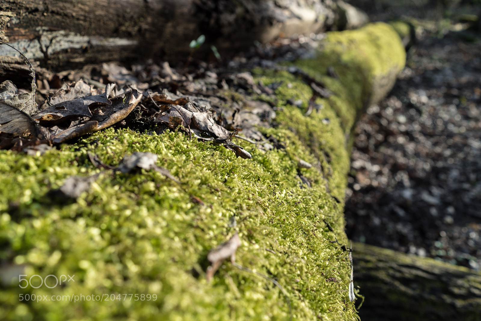 """Sony a7S sample photo. """"Moss"""" photography"""