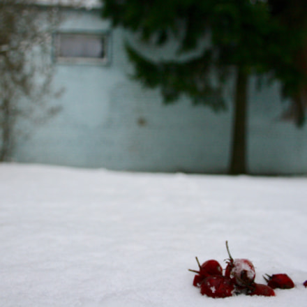 Fruit in the snow, Canon EOS 400D DIGITAL, Canon EF-S 18-55mm f/3.5-5.6 [II]
