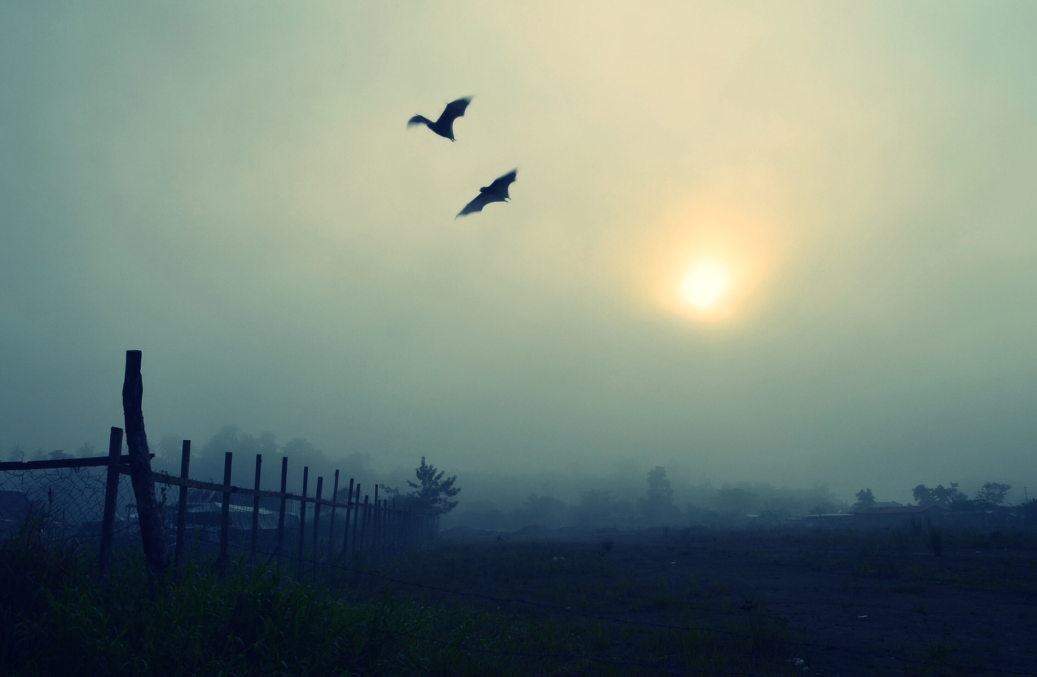 Photograph The murky light of early morn by Vey Telmo on 500px