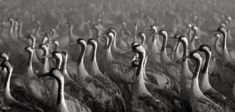 Photograph Army of The Carnes ... by Liron Ha on 500px