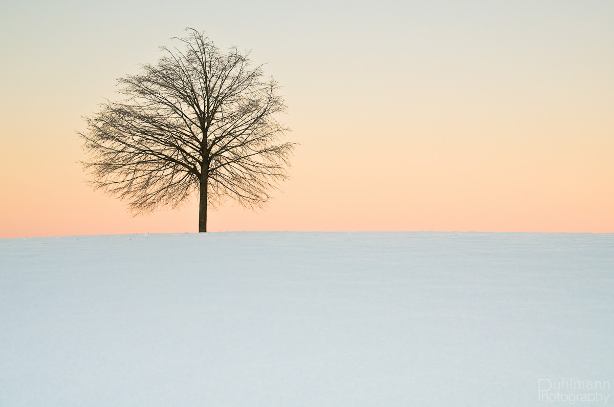 Photograph The Lonesome Tree by Claus Puhlmann on 500px